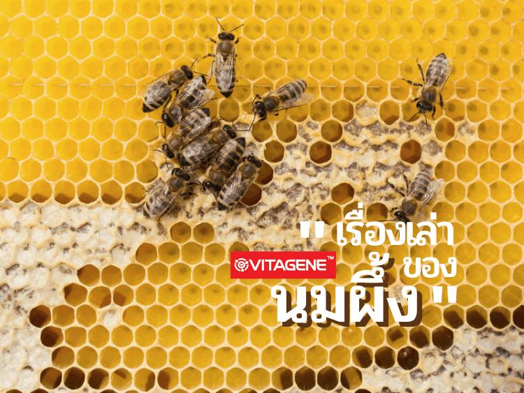ผลิตภัณฑ์เสริมอาหาร, อาหารเสริม, วิตาจิเน่, รอยัลเยลลี่, นมผึ้ง, royal jelly, vitagene